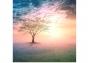 Artwork for 026: Healing Journeys