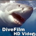 DiveFilm HD Video is hosted on libsyn