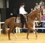 Artwork for 243: Linda Shore - Grand Prix Dressage Rider Discusses Western Dressage