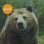 Artwork for S1E18: Der Bär