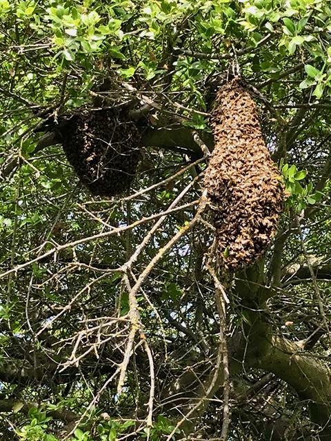 LukeV's Swarm