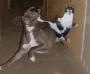 Artwork for TSRP #238: Cats VS. Dogs