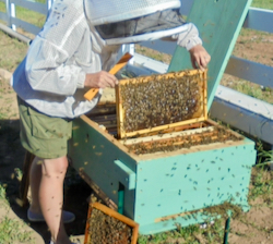 Long Hive