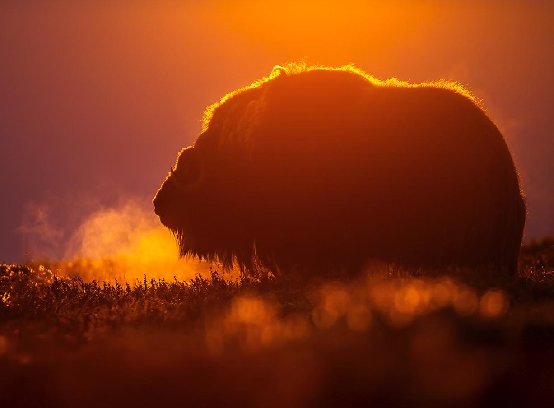 Traumberuf Tierfotograf mit Florian Smit