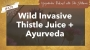 Artwork for Wild Invasive Thistle Juice + Ayurveda