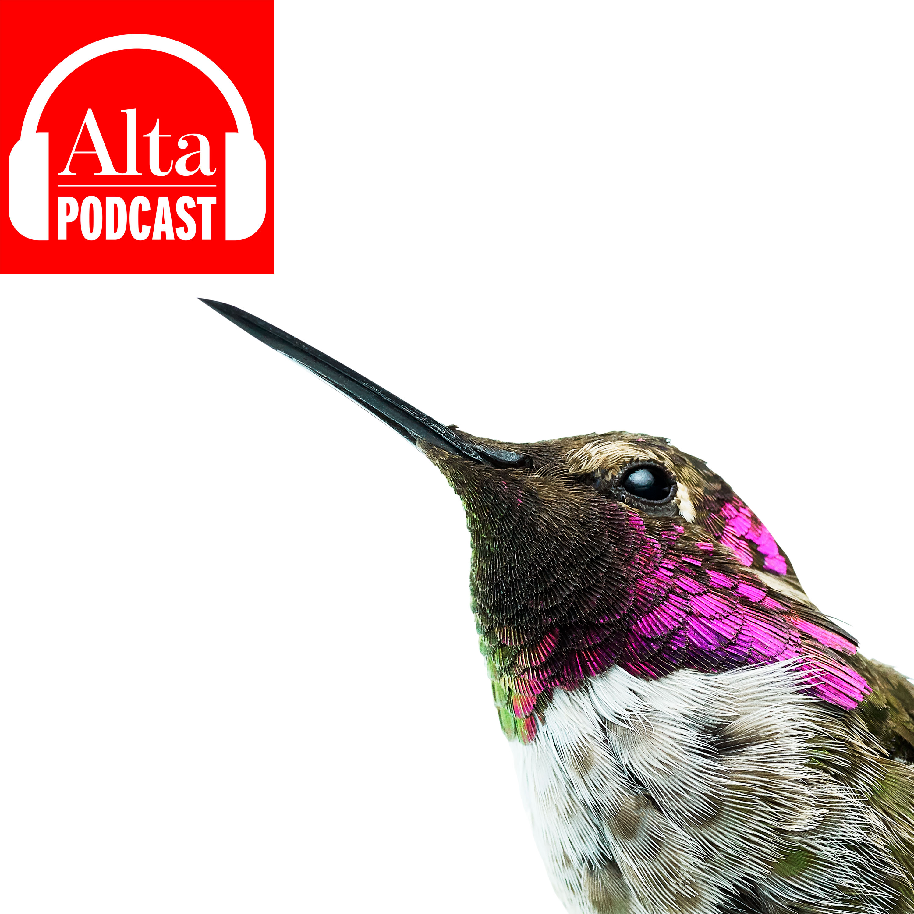 Hummingbirds Are Fascinating. Really.