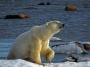 Artwork for Polar Bears with Jim Halfpenny