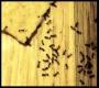Artwork for Ant invasion.