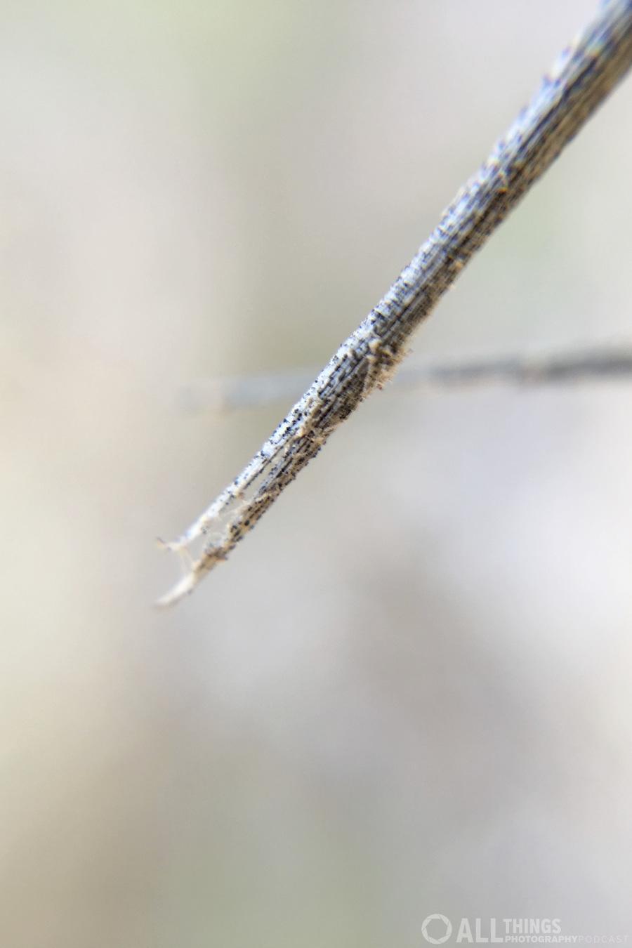 saguaro macro