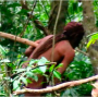 Artwork for Amazon explorer Scott Wallace: Uncontacted indigenous peoples are a true treasure