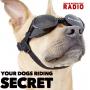 Artwork for The Secret Joy of Dogs