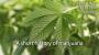 Artwork for A short history of marijuana