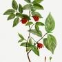 Artwork for E4 Toby Liss - Sweetshrub