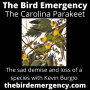Artwork for 047 The Extinction of the Carolina Parakeet with Kevin Burgio