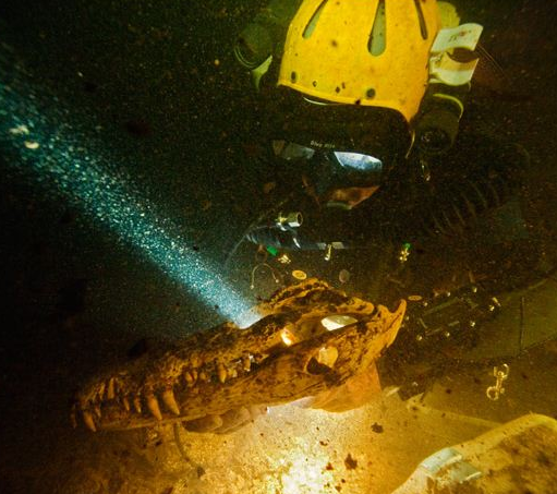 Cave Diving Paleontology in the Bahamas.
