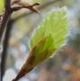 Artwork for 130 Frühling - Erwachen, Aufbruch, Wachstum