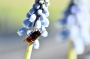 Artwork for Renting Mason Bees - Bonus Ep. 3