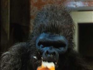 Premiere Episode: John Landis's Schlock A.K.A. Banana Monster