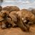 Optimism for elephants fuels effective Indigenous conservation effort show art