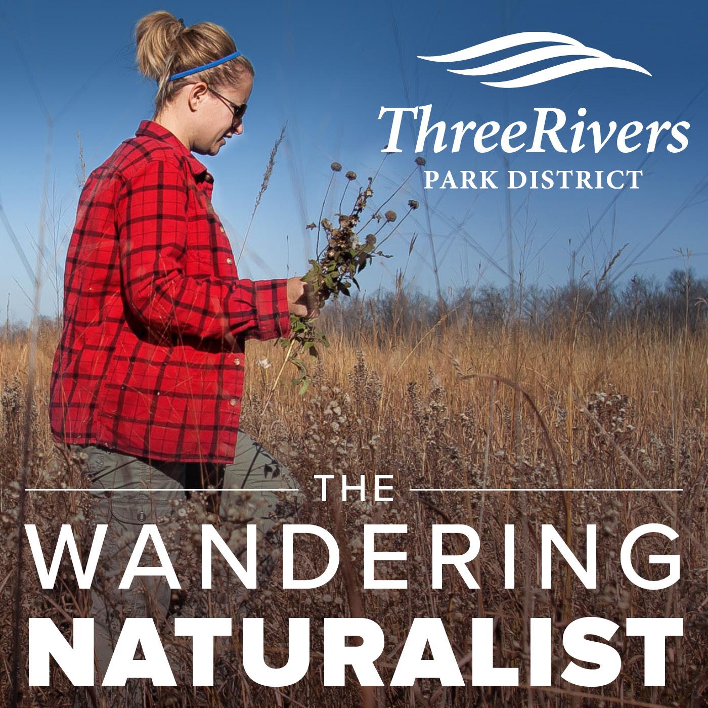 The Wandering Naturalist show art