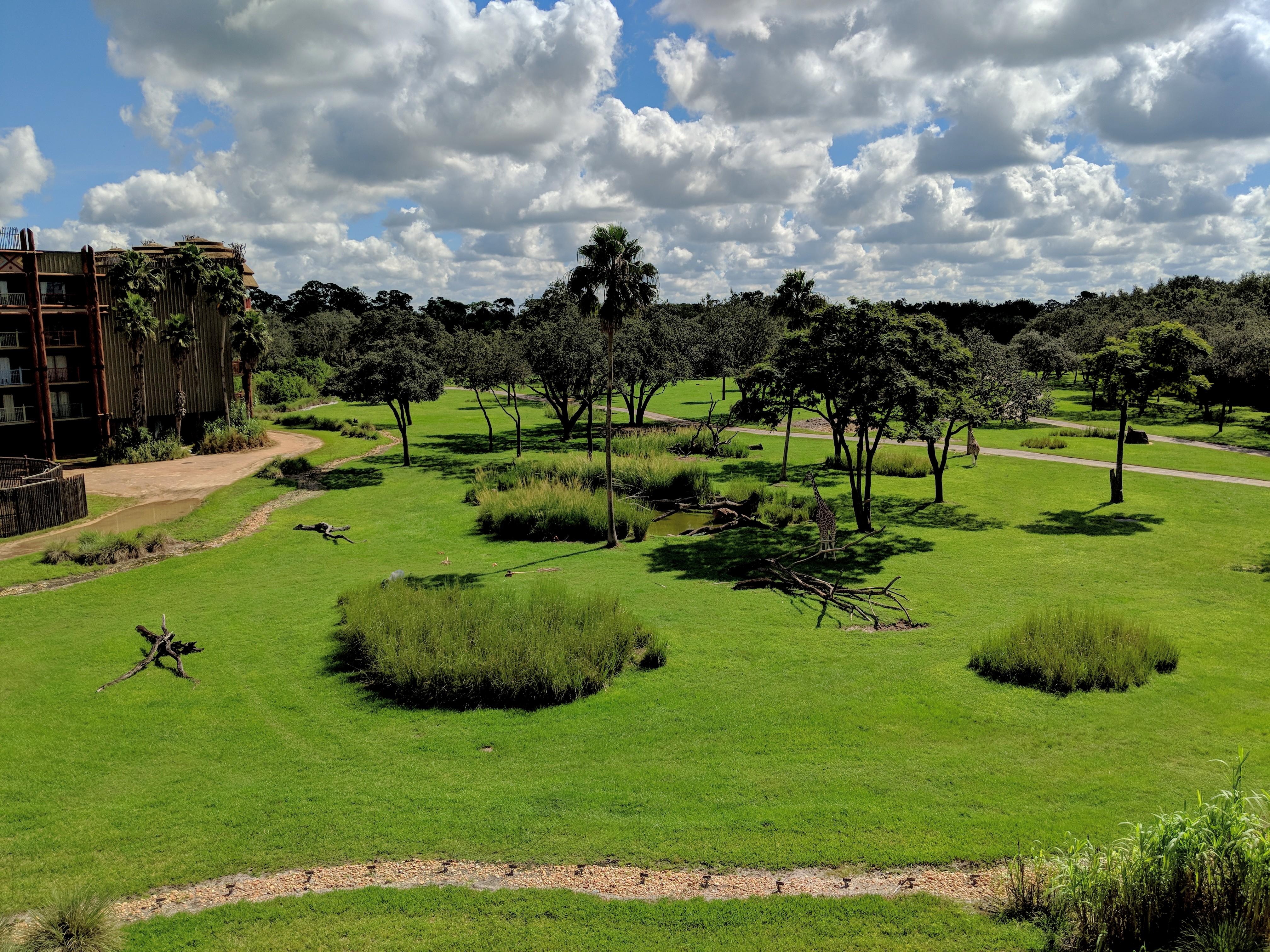Animal Kingdom Lodge Savanna View