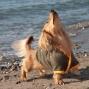Artwork for Amy Silverberg - Wiener Dogs