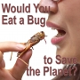 Artwork for Would You Eat a Bug to Save the Planet?
