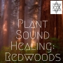Artwork for Plant Sound Healing: Redwoods