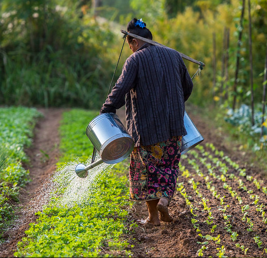 Can agroecology feed the world?