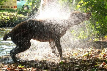 CST #12: The Smell of Wet Dog