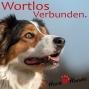 Artwork for Ball-Junkies - arme (gestresste) Hunde