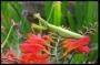 Artwork for A stowaway praying mantis.