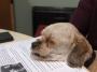 Artwork for Episode 48: Community Animal Rescue Effort - C.A.R.E.
