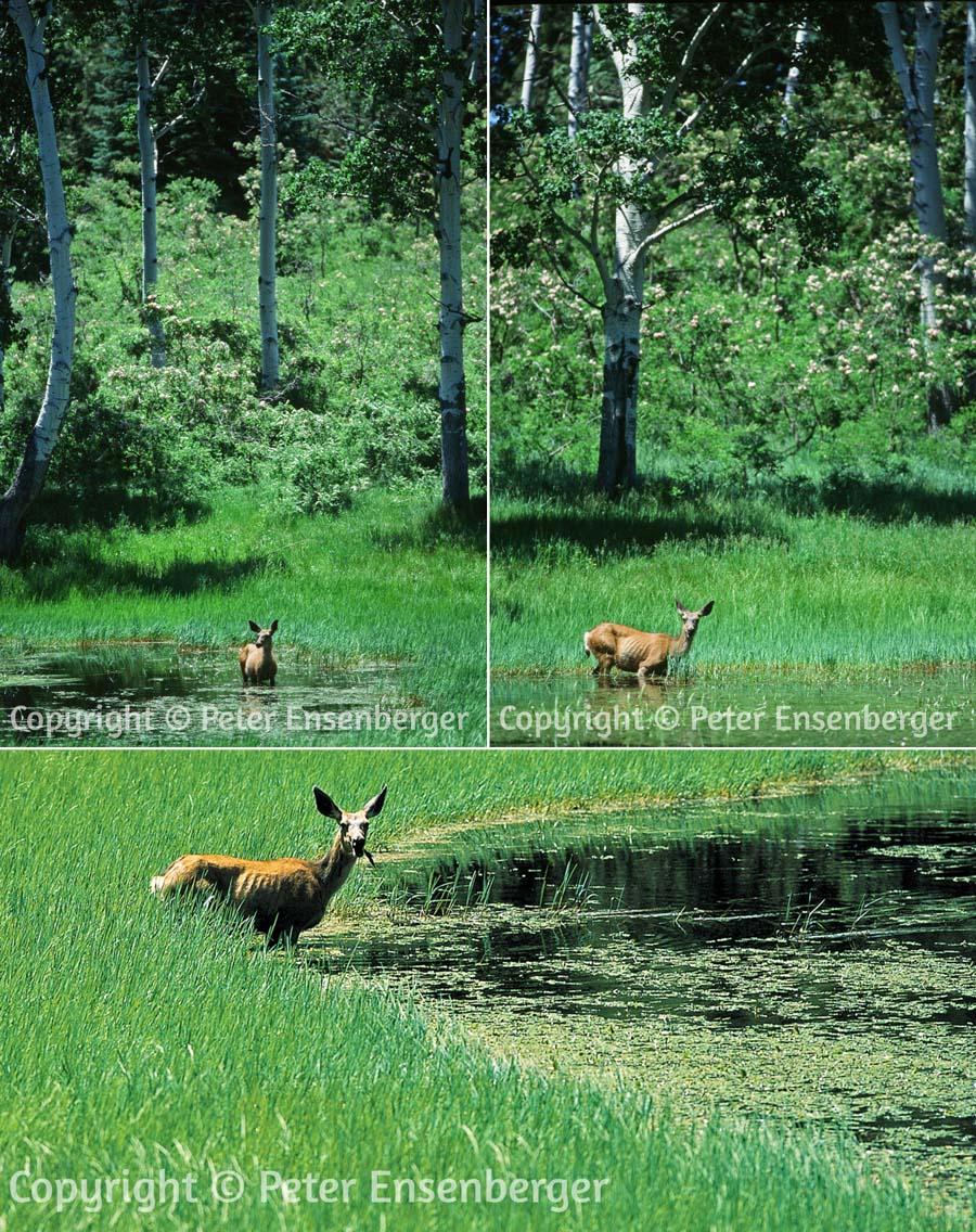 deer x 3