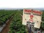 Artwork for The Politics Of Pesticides: Monsanto Under Fire