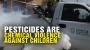 Artwork for Pesticides are CHEMICAL VIOLENCE against CHILDREN
