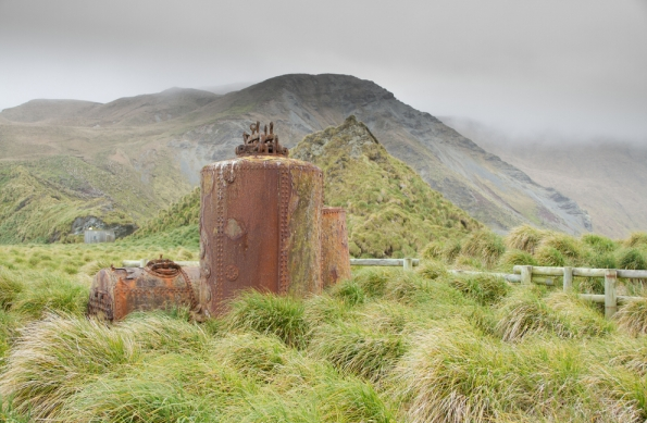 207 - The Animal Horror of Macquarie Island