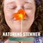 Artwork for Persille Ingerslev: Naturens stemme synger inde i mit dyb