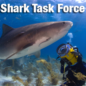 Artwork for Shark Task Force: One of our favorite sharks