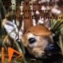 Artwork for HD-22: Fawns and Predation with Dr. Duane Diefenbach