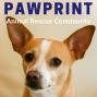 Artwork for 41: Jen Barkan, Rose & Womble: Ask Jen Live Creates Real Estate Magic with Animal Rescue
