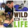 Artwork for WFL 005: Veterinary Care At The Toronto Zoo With Dr. Christopher Dutton