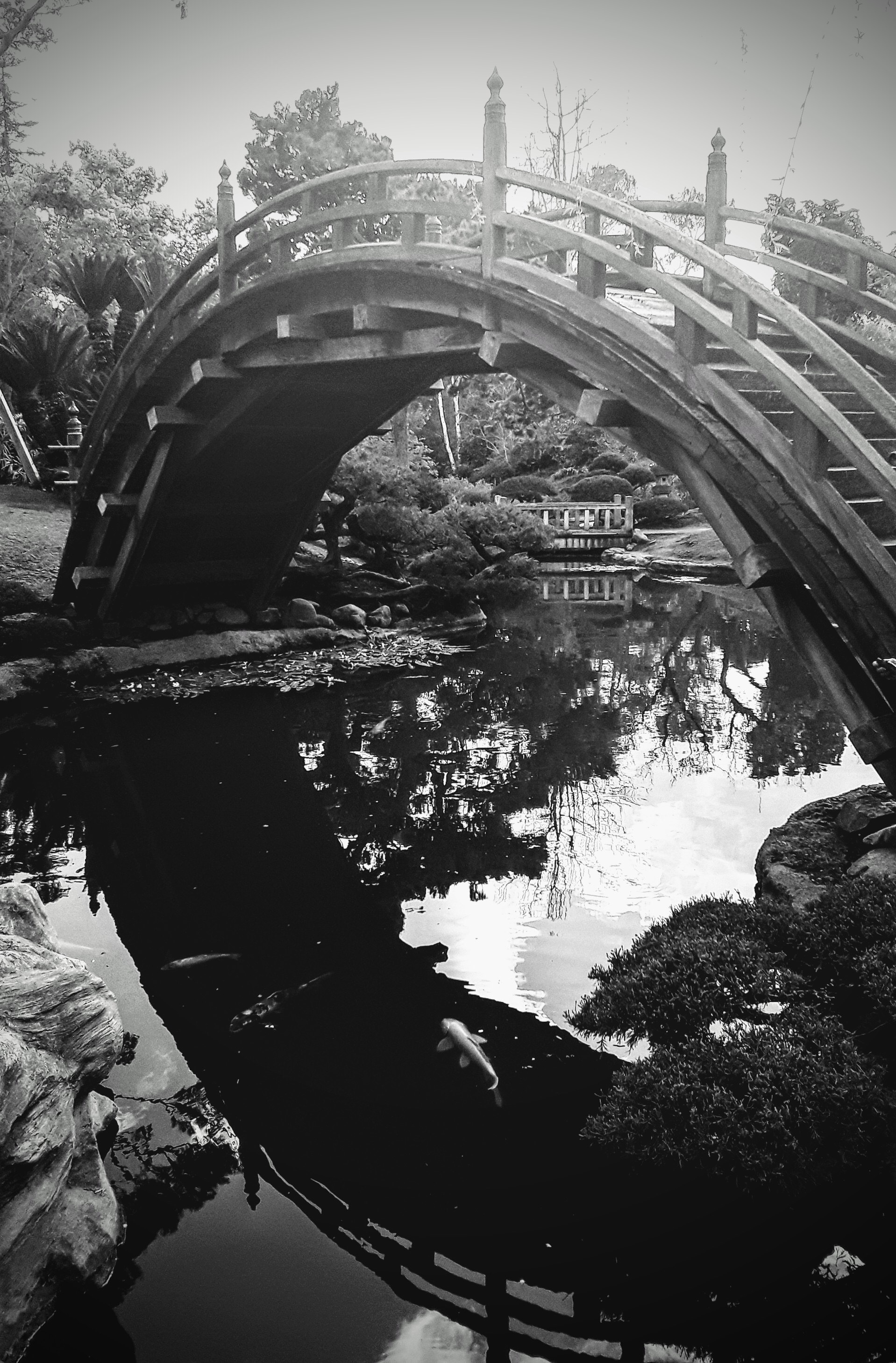 black and white photograph of a Japanese garden and foot bridge