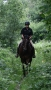 """Artwork for 650: Dr Jane Williams 2 LC - """"Ten Tips For Training Your Horse"""" (Listeners' Choice)"""