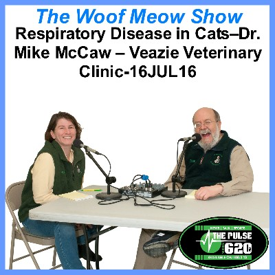 Respiratory Disease in Cats-Dr. Mike McCaw – Veazie Veterinary Clinic