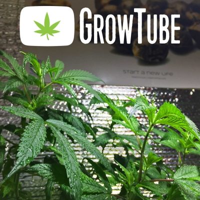 GrowTube - The Show For Cannabis Growers show image