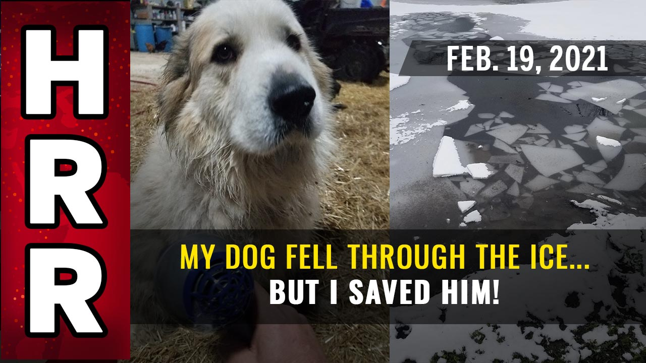 Situation Update, Feb. 19th, 2021 - My dog fell through the ICE... but I SAVED him!