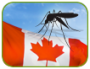 Artwork for Zika Virus Awareness for Canadian Workers