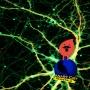 """Artwork for 127 CCNT """"Gnarly Neurons & PSA for Vampires"""" - 02.20.2019"""