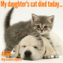 Artwork for #80: My Daughter's Cat Died - Daily Mentoring w/ Trevor Crane #greatnessquest